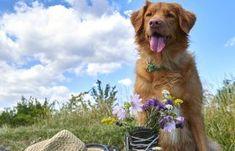 Hundebesitzer aufgepasst! Einem ereignisreichen Urlaub oder Ausflug in Begleitung Ihres vierbeinigen Lieblings steht im Weinviertel nichts im Weg. Animals, Dog Owners, Animais, Animales, Animaux, Animal Books, Animal