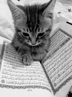 Islamic Wallpaper Iphone, Quran Wallpaper, Mecca Wallpaper, Cute Baby Cats, Kittens Cutest, Photos Islamiques, Cutest Animals On Earth, Baby Animals, Cute Animals
