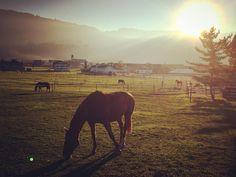 Der #herbst in der #Schweiz macht definitiv Spaß. Schon kurze Spaziergänge hier in #galgenen lassen einem staunen!  #ichliebedenherbst  #autumn #Fall #horse #switzerland