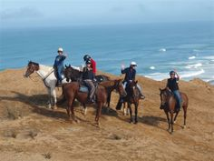 Horse riding treks Paihia, Bay of Islands Experience a magical 1 or 2 hour horse trek with outstanding views of the beautiful Bay of Islands & the Pacific Ocean.