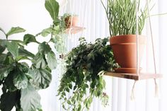 New Darlings - Indoor Plants