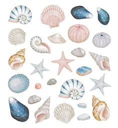 I love the soft colors. White and blue and maybe a soft pink to match the white fish scales! Motivos del mar para decorar lo que sea. Watercolor Sea, Watercolor Animals, Watercolor Paintings, Shell Drawing, Tattoo Bein, Sea Life Art, Seashell Painting, Shell Crafts, Aesthetic Stickers