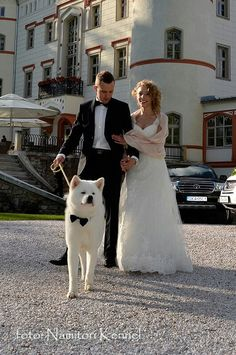 Would be a cute idea for pic Loyal Dog Breeds, Loyal Dogs, Japanese Akita, Japanese Dogs, Cute Puppies, Cute Dogs, Dogs And Puppies, Wedding Dogs, Cute Puppy Wallpaper