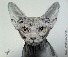 Art sphynx
