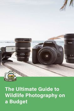 You don't need to buy the most expensive kit to engage in wildlife photography. This guide shows you some popular, and cheaper, alternatives. Wildlife Photography Tips, Photography Basics, Photography Tips For Beginners, Photography Camera, Photography Equipment, Underwater Photography, Photography Tutorials, Nature Photography, Best Camera