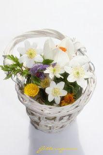 Springflowers.   Hvitveis, krokus og hestehov