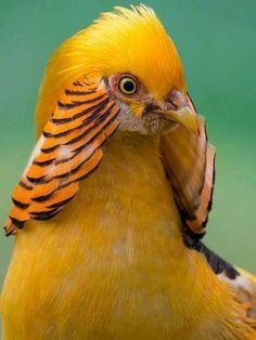 #BIRDS##CUT# #ANIMALS##PETS#