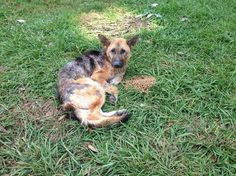 Horribly neglected dog abandoned by owners, attacked and left for dead  SUPER URGENT! Need help!! https://www.facebook.com/photo.php?fbid=542887065802624&set=a.482377418520256.1073741827.436662453091753&type=1&theater