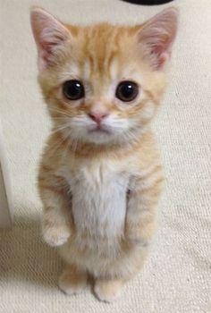 Cute standing cat!