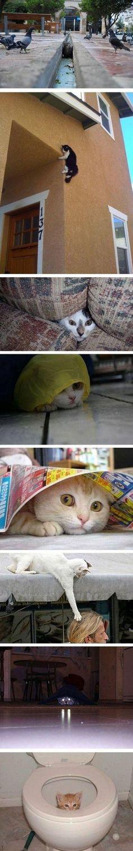 Ninja Katzen