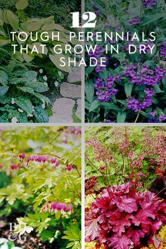 A shady spot can be challenging to work within your garden, especially if it tends to stay dry. If you pick the right plants, you can create a thriving perennial garden, even in a dry and shady spot. Plants That Like Shade, Dry Shade Plants, Shade Garden Plants, Cool Plants, Garden Shrubs, Shade Tolerant Plants, House Plants, Drought Tolerant, Shrubs For Dry Shade