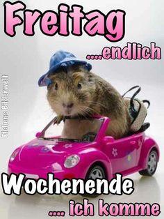 Die 79 Besten Bilder Von Freitag Guten Morgen Chistes Humor Und