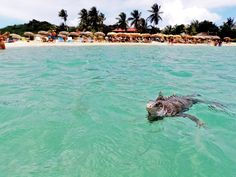 Find yourself island hoppin' with iguanas at St. Martin (Pinel Island, St. Martin).