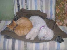 Dormindo no casaco de mami