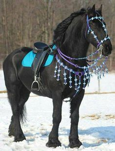 Pretty blue tack, handmade bridle, and the horse, Beautiful!