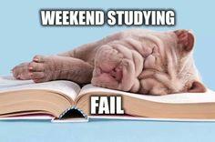A bad study buddy