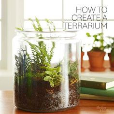 Terrariums are a beautiful addition to desks, dining room tables, and other well-lit spots. Check out our easy step-by-step instructions to learn how to plant a terrarium.