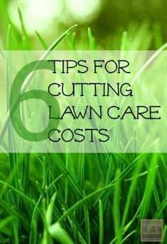 6 Tips for Cutting Lawn Care Cost - Keeping up a large yard can be extremely costly. Here are some great ideas to get you on the way to cutting lawn care costs on a large yard Large Backyard Landscaping, Landscaping Tips, Home Design, Modern Design, Landscape Design, Garden Design, Landscape Materials, Lawn Care Tips, Lawn Sprinklers