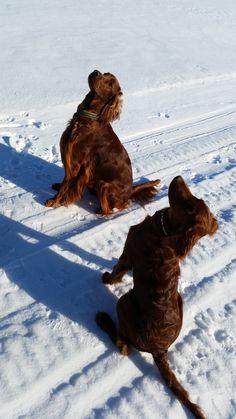 Talvinen lenkki :)
