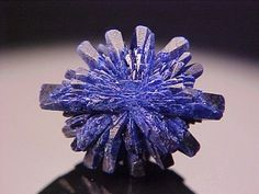 Superb Azurite flower - Arizona