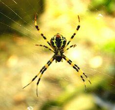 We love Sumatra's beautiful spiders! Gunung Leuser National Park, National Parks, Spiders, Photography, Travel, Animals, Beautiful, Photograph, Viajes
