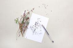 Winterliche Zweige Tusche-Zeichnung | ink drawing winter sprigs | STUDIO KARAMELO | floral illustration