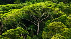 Timber Resource Management, managed teak and tropical hardwoods