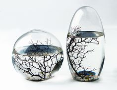 FIRST THING ON MY XMAS LIST.....  :)  EcoSphere Closed Aquatic Ecosystem. $60.76