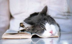 The Student Who Slept in the Library | 21 Cats You Went To High SchoolWith