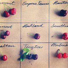 cherries at new amsterdam market | erin jang