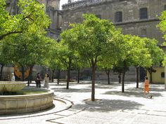 Court of the Oranges | Seville | Flickr - Photo Sharing!