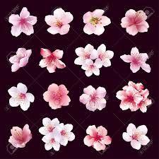"""Résultat de recherche d'images pour """"branches fleuries cerisiers du japon"""""""