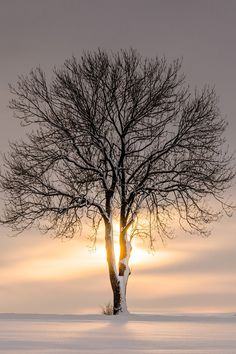 Solitary Treescape #3, by Heiko Gerlicher, on 500px.