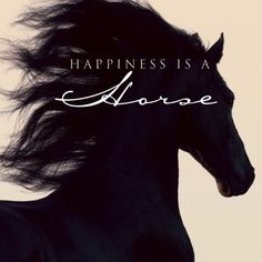 Happiness is a horse The only thing better is more horses!