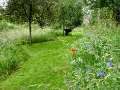 mown-path-meadow-garden-wheelbarrow-sally-french-gardenista