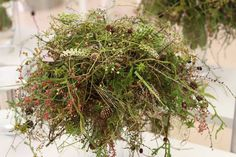 ✿ Flower Arrangements, Herbs, Victoria, Flowers, Floral Arrangements, Herb, Royal Icing Flowers, Flower, Florals