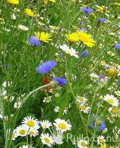 Skapa enkelt en fin svensk traditionell sommarblomsteräng med 28 fleråriga arter. Rulla ut duken nu på hösten så har du blommor hela nästa sommar för och sensommar. 70%försommar och 100% blommor sensommar. Väldigt vackert!! Glass, Traditional, Drinkware, Corning Glass, Yuri, Tumbler, Mirrors