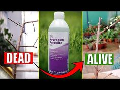 HOW TO CORRECTLY USE HYDROGEN PEROXIDE IN YOUR GARDEN? - YouTube Organic Gardening, Gardening Tips, Seed Germination, Chemical Formula, Baking Soda Uses, What To Use, Hydrogen Peroxide, You Youtube