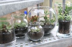 Open Terrarium – No Fuss Garden.  Reuse candle & other jars or bottles.