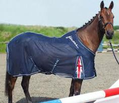 Check Out The John Whitaker Rug Collection Promotion Horse Hound