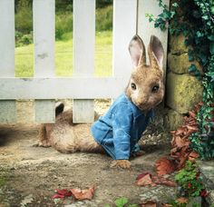 Hop to it: Why Peter Rabbit is the best kids' film of the year Beatrix Potter, Zootopia, Diy Painting, Painting Frames, Peter Rabbit Movie, Literary Heroes, Ile Saint Louis, Diamond Drawing, Kawaii
