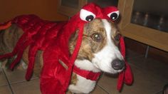 All dressed up, someplace to go: Pets get ready for Do Dah Day in Birmingham.