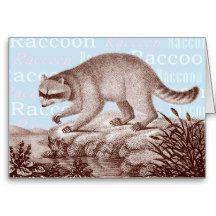 Raccoon Card - Blue Text Background
