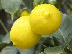 Los limones de Turquía son un alimento de riesgo