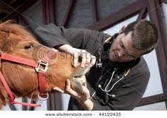 Start Your Career in Veterinary Medicine in Lakeville, Minnesota.