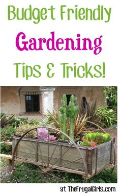 """Could you use some easy Budget Friendly Gardening Tips and Tricks?? Check out these tips shared right here and on The Frugal Girls Facebook page! Diana said: """"Give your garden a distressed look. L..."""