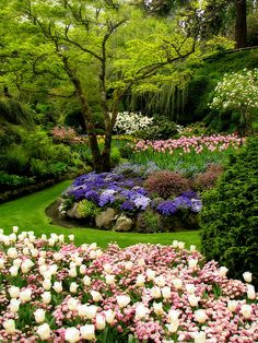 MY KIND OF GARDEN! Colours, inviting grass pathways meandering through the lovely pink,purple and white plants!!