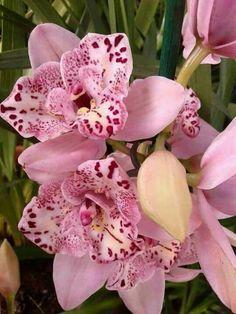 Orchid w' Pretty Pink Petals!