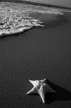 Ocean - starfish