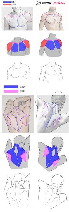 Human Anatomy For Artists, Human Anatomy Drawing, Human Body Anatomy, Human Figure Drawing, Figure Sketching, Guy Drawing, Anatomy Art, Drawing Tips, Drawing Reference Poses